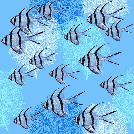 Banggai Cardinalfish Galore (maya blue) fabric by helenpdesigns on Spoonflower - custom fabric