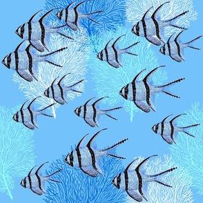 Banggai Cardinalfish Galore (maya blue)