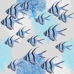 Banggai Cardinalfish Galore (blue silver)