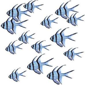 Banggai Cardinalfish Galore (white)