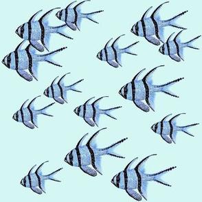 Banggai Cardinalfish Galore (mint)