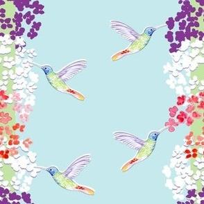 Hummingbird Buzz