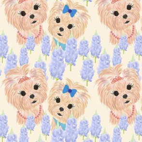 Blue Bonnets - Yorkies 3""