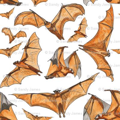 flying fox bats water color