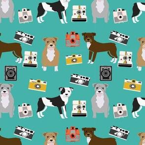 pitbull camera dog breed photographer teal