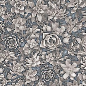 succulent greys