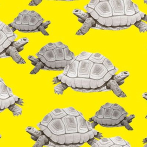 Turtles on Yellow