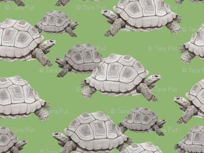 Turtles on Green