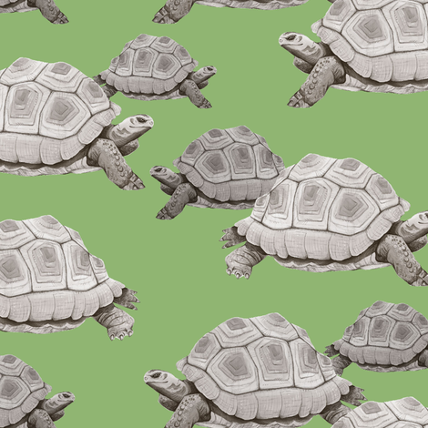 Turtles on Green fabric by taraput on Spoonflower - custom fabric
