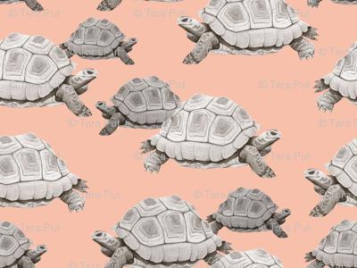 Turtles on Pink
