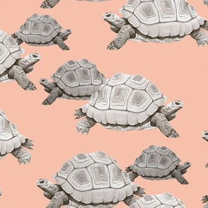 Turtles on Pink