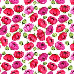 Plentiful Poppies