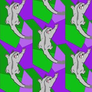 Platinum Sugar Glider on Green Purple Shapes