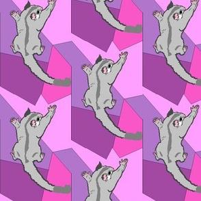 Platinum Sugar Glider on Purple Shapes