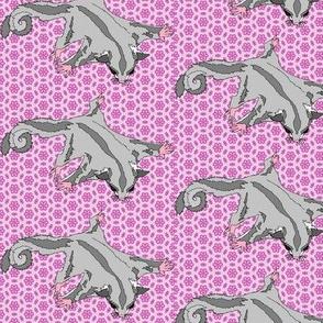 Platinum Sugar Glider on Pink Flowers 2