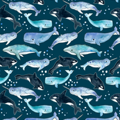 Whales, Orcas & Narwhals on Navy