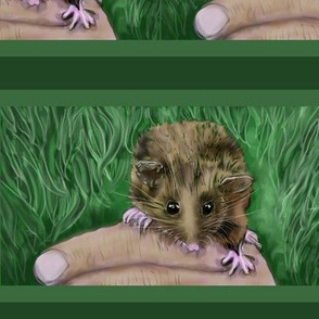 "Endangered Pygmy-possum Australian-6""high"