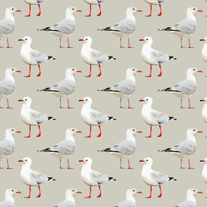 Seagulls on Tan/Gray