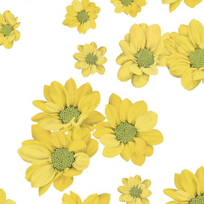 Yellow daisies on white