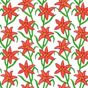 Orange Daylily on White