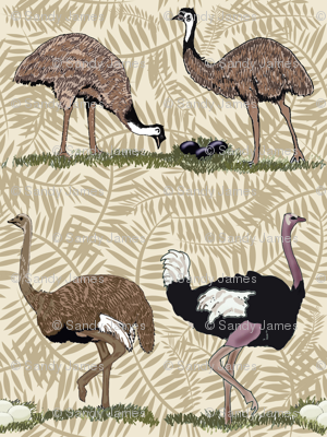 flightless birds large