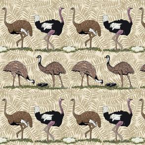 flightless birds large