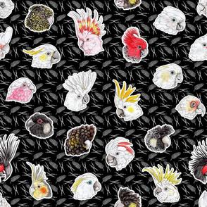21 Cockatoos