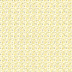 Japanese Anenomes in Yellow Tiny