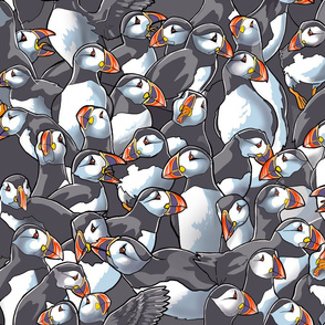 Puffin Huddle