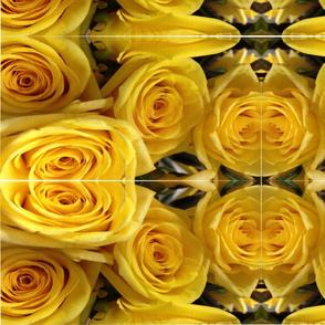 Yellow Roses Rollo