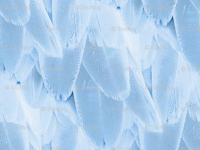 bird feather - blue