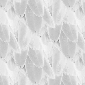 bird feather - light gray