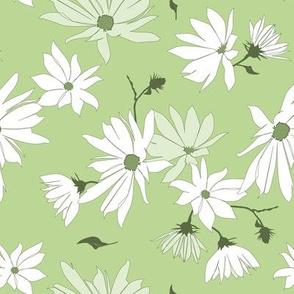 topinambour (jerusalem artichoke) blossoms on light green - large