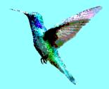 Rrhumming-birds_thumb