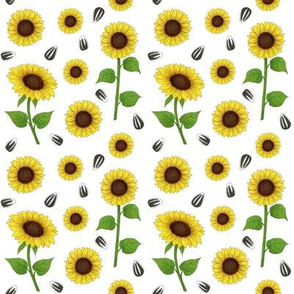 Sunflowers and seeds on white