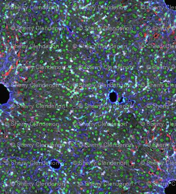 Inner Peace Hepatocytes