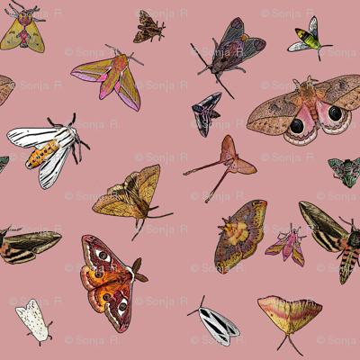 Many Moths 9