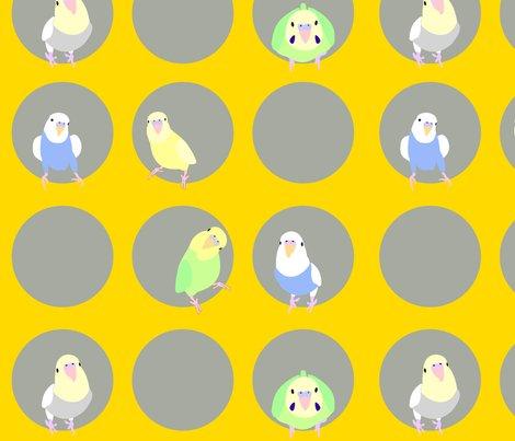 Rparakeets1_shop_preview