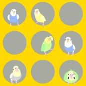 Rparakeets1_shop_thumb