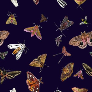 Many Moths 53