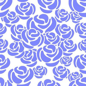 Peri Roses on White