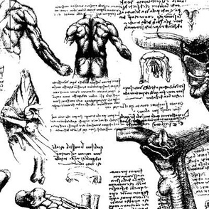 Da Vinci's Anatomy Sketchbook // Large