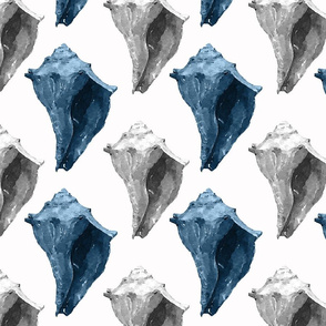 Blue & White conch shells
