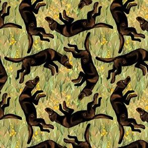 Square Dancing Chocolate Labrador Retrievers