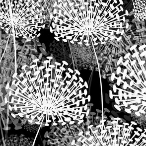 Black and White Dandelions Large Scale