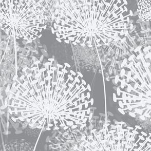 Gray Dandelions