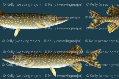 smaller northern pike on navy blue