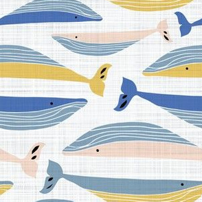 Colourful Whale pod