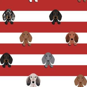 dachshund stripes dog breed fabric red