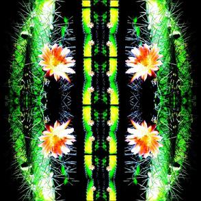 Cactus Euphoria